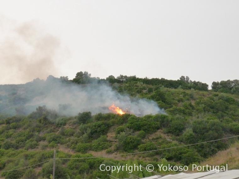 ようこそポルトガル山火事